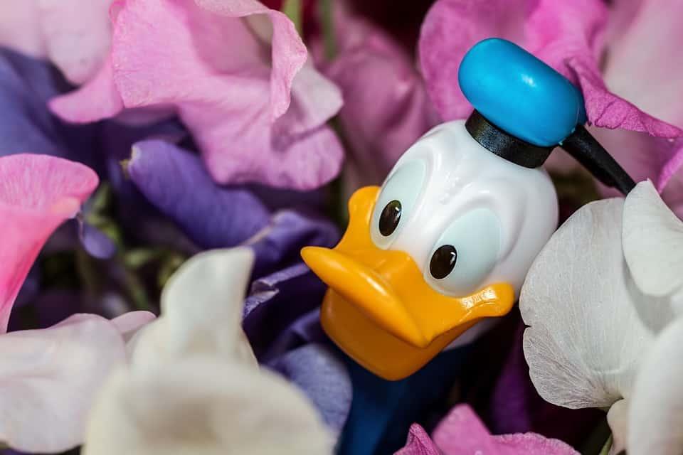 donald-duck-973226_960_720