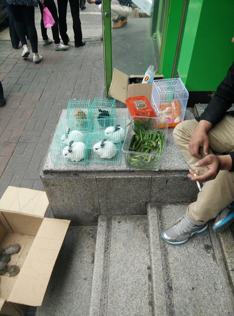 Dyr til salgs. Foto: Reisetilkina.com